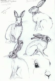 Fineliner: March 2012 Pencil Drawings Of Animals, Animal Sketches, Drawing Sketches, Art Drawings, Rabbit Drawing, Rabbit Art, Rabbit Anatomy, Pop Art Wallpaper, Nature Sketch