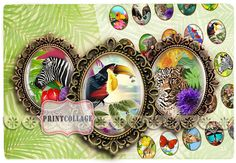 Digital Printable Sheets 40x30_30x22_25x18_18x13mm by PrintCollage, $4.30 Exotic Animals By PrintCollage Tropical Animals, Exotic Animals, Exotic Pets, Animals Images, Digital Collage, Collages, Clip Art, Printables, This Or That Questions