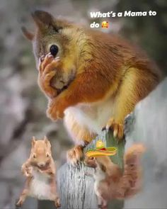 Baby Animals Super Cute, Cute Funny Animals, Funny Cute, Grumpy Cat Humor, Squirrel Humor, Gif Noel, Bisous Gif, Animated Emoticons, Dancing Animals