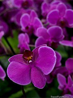Purple Orchid Flowers in Kew Gardens - London, England