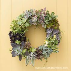 Would love to do this for our front door... only probably faux plants instead of Living Succulent Wreath - via Succulents and Sunshine