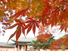 Fall leaves - sưu tầm