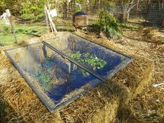 Straw Bale Gardening, great in all climates from the Arctic to the Caribbean islands! is part of Cold frame Straw Bale Gardening is essentially container gardening, without the cost of a container o - Straw Bale Gardening, Container Gardening, Container Houses, Farm Gardens, Outdoor Gardens, Roof Gardens, Organic Gardening, Gardening Tips, Jardin Decor