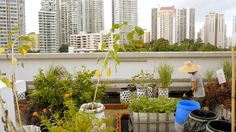 City Crops - Cape Town, London (Underground) & Singapore (ComCrop) on Vimeo, high quality video on these three different urban projects.