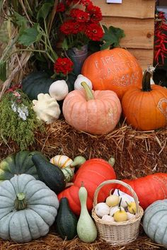 Pumpkin, Squash, beets - oh, the delicious fall organic bounty at Farmers Market Dulces Halloween, Fall Halloween, Halloween Pumpkins, Harvest Time, Fall Harvest, Autumn Decorating, Happy Fall Y'all, Autumn Day, Autumn Summer