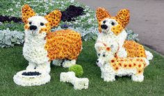 Our floral corgis that met the Queen... and Alan Titchmarsh at the RHS Chelsea Flower Show