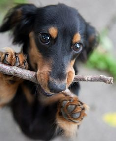 this is my stick, there are many like it, but this one is mine