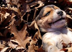 I love fall....and puppies!