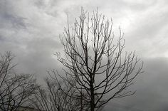 3/365 - A bare tree in a park.