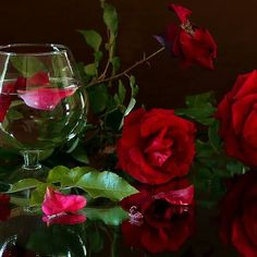 Red Flowers, Red Roses, Still Life Flowers, Most Beautiful Flowers, Red Wine, Alcoholic Drinks, Fragrance, Happy Birthday, Stuffed Peppers