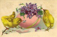 chicks & egg