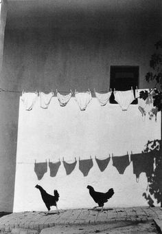 chickens and laundry