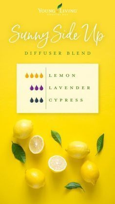 Lemon oil is one of Young Living's most popular essential oils. Discover the best Lemon essential oil uses and benefits to enhance your life. Helichrysum Essential Oil, Doterra Essential Oils, Young Living Essential Oils, Essential Oil Blends, Essential Oil Combinations, Aromatherapy Oils, Aromatherapy Recipes, Diffuser Recipes, Diffuser Blends