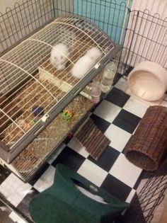 Twee Teddy Dwerg konijntjes in de Dwergkonijnenkooi