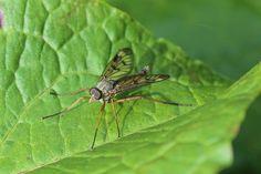 Kostenloses Foto: Insekt, Nahaufnahme, Wald, Flügel - Kostenloses Bild auf Pixabay - 792333