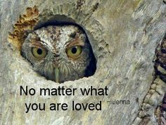 Says the wise owl