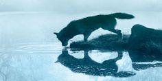 """""""Zanna Bianca nasce nel Wild e nasce lupo con dentro il codice genetico del cane"""": cosìDavide Sapienzadescrive la natura doppia e apparentemente inconciliabile del protagonista dell'omonimo romanzo  ..."""