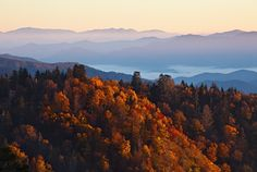 Popular travel website TripAdvisor has ranked the Gatlinburg fall colors among the best in the United States.