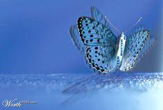 나비효과에 대한 이미지 검색결과