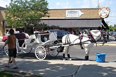 Horse & Carriage Rides available in front of the Riviera all summer long!