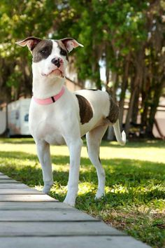 Gypsy - Florida  For more information, please email mailto:Adoptions@...
