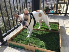 In this article we'll explore the different types of grass pads, real vs synthetic, how to train your dog to use one and our top 4 grass pads to put on your patio, porch or balcony.