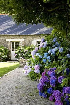 cottage garten 5 Plants Every Southern Garden Needs Hortensien The post 5 Plants Every Southern Garden Needs appeared first on Garden Easy. Hydrangea Landscaping, Front Yard Landscaping, Landscaping Ideas, Hydrangea Garden, Bobo Hydrangea, Southern Landscaping, Purple Hydrangeas, Allium Flowers, Hydrangeas
