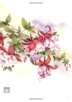 Wendy Tait certainly knows how to paint fuchsias in watercolour. This is from her book Watercolour Flowers