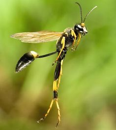 Insect Pictures : Discovery Channel