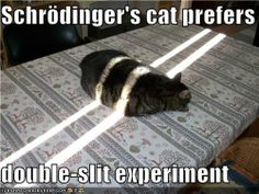 Physics kitties take on the big issues Double Slit Experiment, Physics Questions, Schrodingers Cat, Kitty Cats, Math Memes, Science Humor, I Laughed, Funny Cats, Hilarious