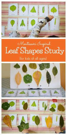 Montessori Inspired Leaf Shapes Study