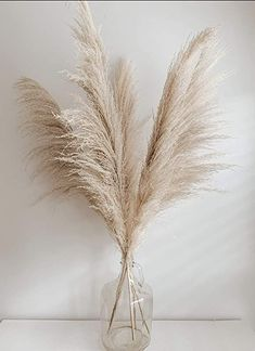 5 Large Dried Pampas Grass 3ft | Dried Flowers For Interior Decoration | Dried Flower Arrangements | Jumbo Pampas Grass Aesthetic Room Decor, Beige Aesthetic, Living Room Decor, Bedroom Decor, Grass Decor, Deco Nature, Dried Flowers, Room Inspiration, House Design