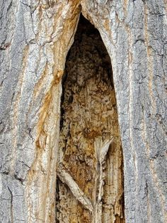 I find myself wanting to write a story about small beings who live behind a door in a tree in the woods along the river.....