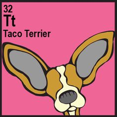 Taco Terrier (Chihuahua x Toy Fox Terrier)