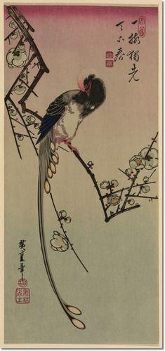 Ume ni onagadori by Andō, Hiroshige, 1797-1858, artist   Title Translation: Plum blossom and magpie (long tailed cock onagadori).