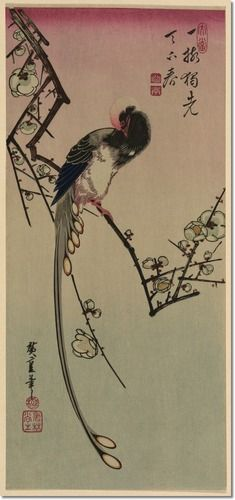 Ume ni onagadori by Andō, Hiroshige, 1797-1858, artist   Title Translation: Plum blossom and magpie (long tailed cock onagadori).
