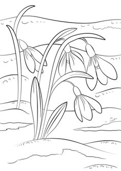 Adult Coloring Pages - Spring Break Coloring Sheets Inspirational Snowdrops First Sign Of Spring Coloring Page Coloring Pages Nature, New Year Coloring Pages, Spring Coloring Pages, Flower Coloring Pages, Coloring Pages For Kids, Coloring Books, Free Coloring, Spring Sign, Spring Art