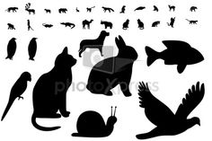 animal shapes - Google Search