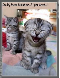 funny animal pictures - Bing Images