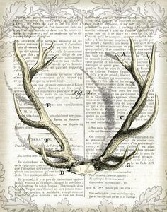 Regal Antlers on Newsprint I  - 11x14 by