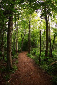 Nova Scotia wilderness