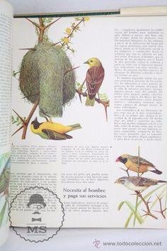 Libros de segunda mano: Libro Naturalia. Enciclopedia Ecológica Ciencias Naturales. Vol III. La Fauna Silvestre - Codex,1965 - Foto 7 - 50515355