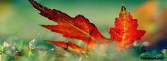 Autumn Leaf Facebook Covers, Autumn Leaf FB Covers, Autumn Leaf Facebook Timeline Covers, Autumn Leaf Facebook Cover Images