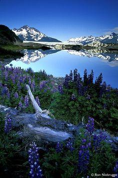 "renamonkalou: ""Sheridan Glacier | Ron Niebrugge Chugach National Forest ~ Cordova ~ Alaska "" The World Around Us"