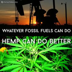 One acre of Hemp can produce anywhere from 200-300 gallons of oil. This oil can…
