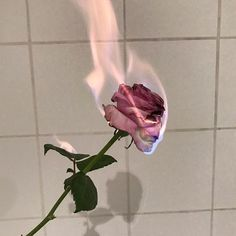 """13 k mentions J'aime, 14 commentaires - Lisa McConniffe 爱 (@lisamcconniffe) sur Instagram : """"""""May the bridges I burn light the way"""" // ph @betsyjohnson_ #rose #pink #light #fire #love…"""""""
