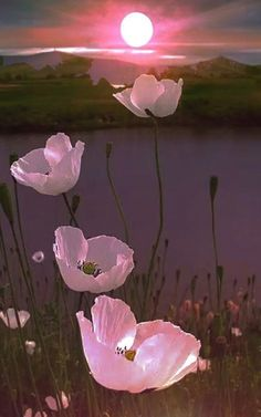 """Danielle on Twitter: """"Good Evening 🌸… """" Flower Wallpaper, Nature Wallpaper, Flower Pictures, Nature Pictures, Flowers Pics, Hanging Flowers, Summer Pictures, Pink Flowers, Beautiful Pictures"""