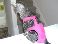 """Joybies Hot Pink Piddle Pants(TM) for Small Cat (Measuring 13""""-15"""" From Collar to Base of Tail) by Joybies, http://www.amazon.com/dp/B001N416NM/ref=cm_sw_r_pi_dp_9r.Xpb0EHV3XV"""