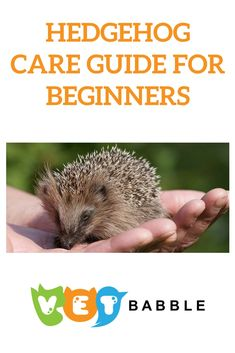 Are you considering adopting a pet Hedgehog? Our Hedgehog Care Guide will provide you with tips and advice on how to care for your new spiky friend. Hedgehog Care, Pygmy Hedgehog, Baby Hedgehog, Hedgehog Supplies, Rabbit Diet, Pet Rabbit, Best Pets For Kids, Animals For Kids, Cute Animals