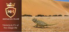 Namib Desert, In The Heart, Environment, River, City, Cities, Environmental Psychology, Rivers